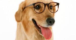 Szerinted a te kutyád örül neked? Teszteld!