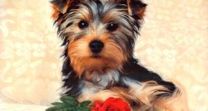 Milyen a számodra megfelelő kutya?