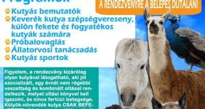 Állatok Világnapja a NOÉ Állatotthonban!