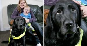 Vakvezető kutya mentette meg a kisfiú életét