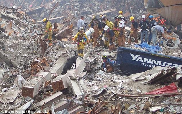 Túlélők keresése: A kutyák éjjel-nappal dolgoztak, abban a hiú reményben, hogy valaki még életben van a World Trade Center helyén