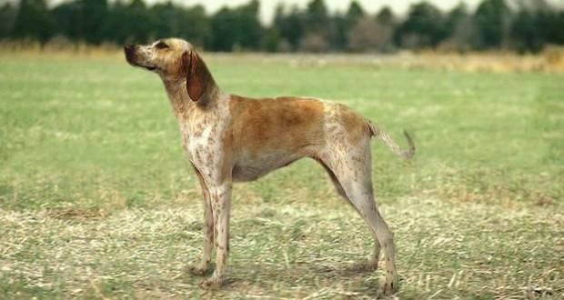 Bemutatná kutyafajtáját?