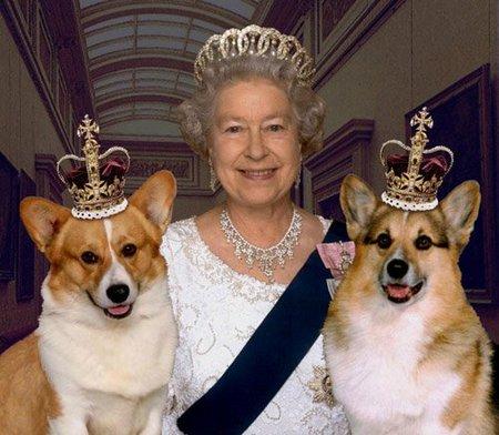 Mit esznek az angol királynő kutyái?