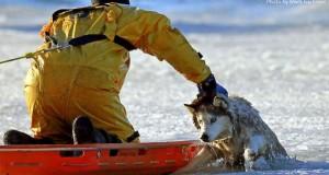 Bostoni tűzoltó mentett meg a fagyhaláltól egy kutyát