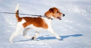 8 biztonsági tipp télre a kutyáknak