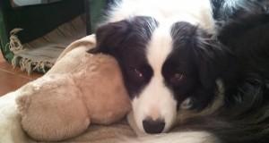 A kutyakilövésekről újra