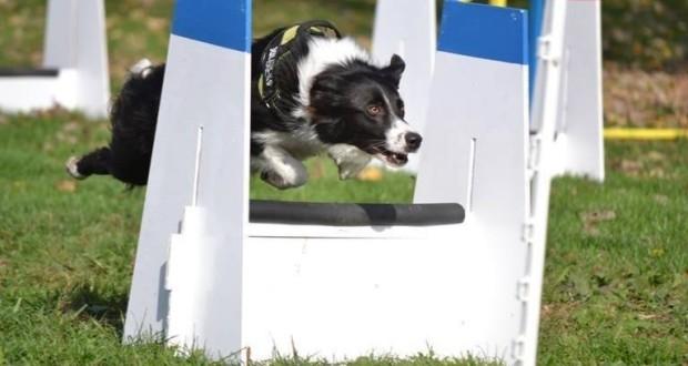 Vegyél részt Guinness-rekordkísérletben, Petfest!