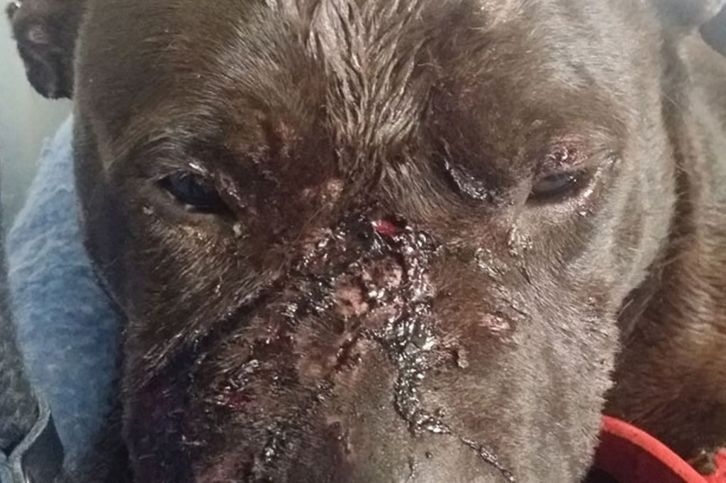 A-dog-found-with-terrible-injuries-in-a-Nechells-park