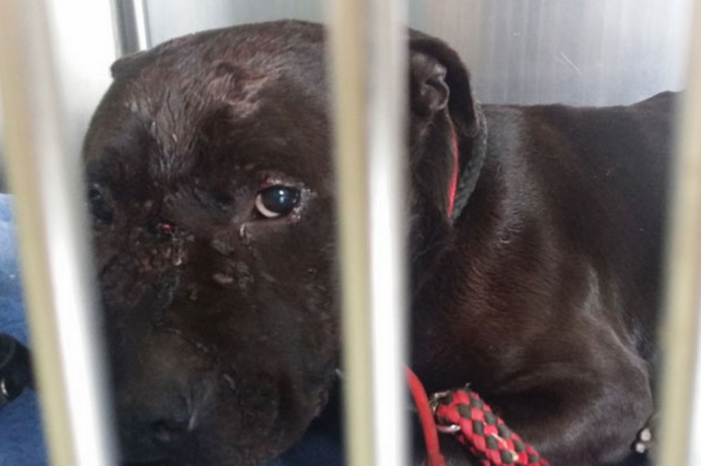 A-dog-found-with-terrible-injuries-in-a-Nechells-park (2)