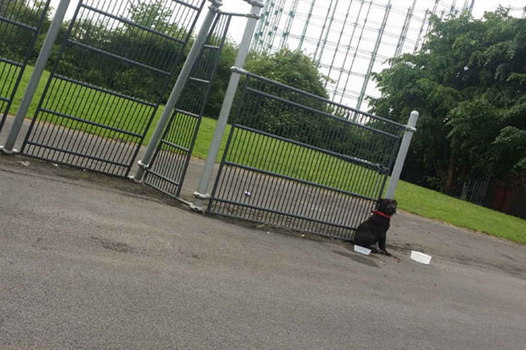 A-dog-found-with-terrible-injuries-in-a-Nechells-park (4)