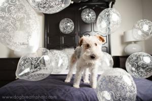edes-kutyas-fotok10