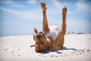edes-kutyas-fotok14