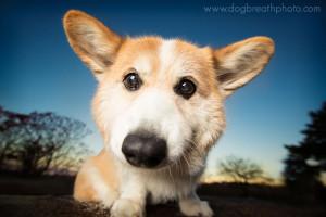 edes-kutyas-fotok15