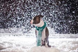 edes-kutyas-fotok18