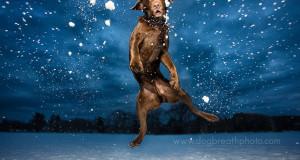 Csodálatos fotók kutyákról