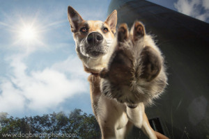 edes-kutyas-fotok20