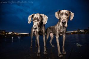 edes-kutyas-fotok21