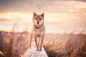 edes-kutyas-fotok22