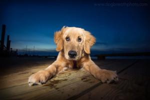 edes-kutyas-fotok23