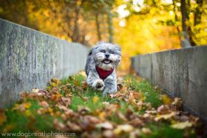 edes-kutyas-fotok24