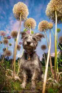 edes-kutyas-fotok4