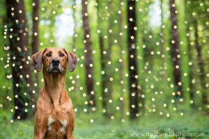 edes-kutyas-fotok6
