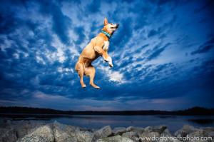 edes-kutyas-fotok7