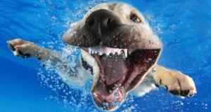Csodás vízalatti fotók kölyök kutyákról!